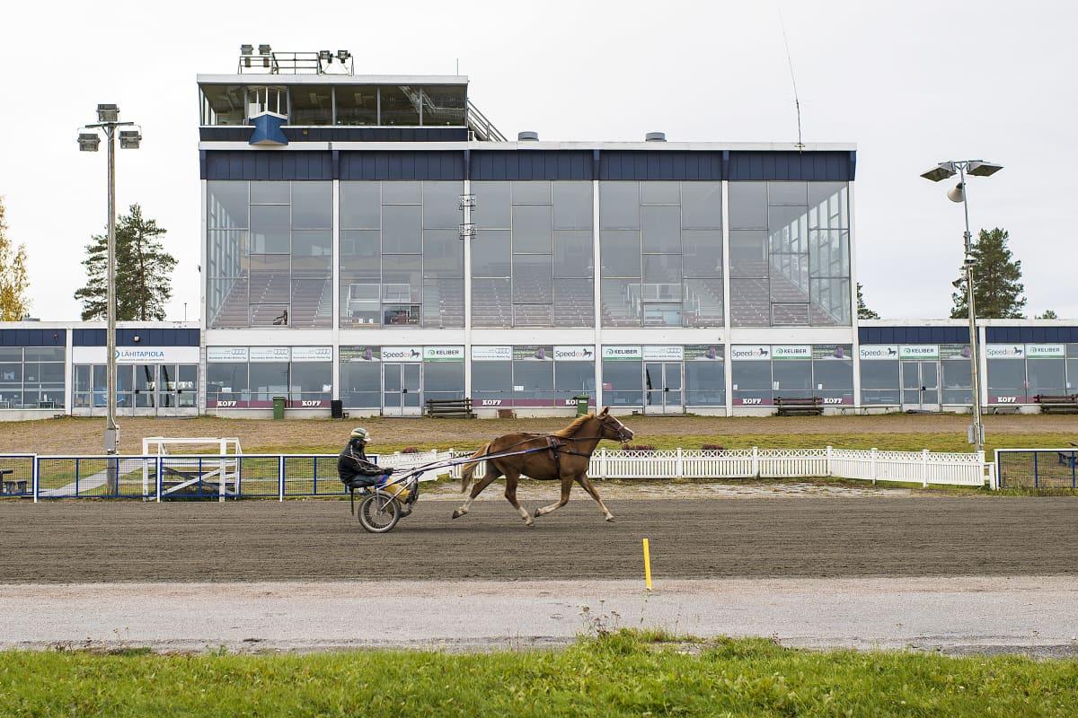 Hevonen juoksee rakennuksen edessä.