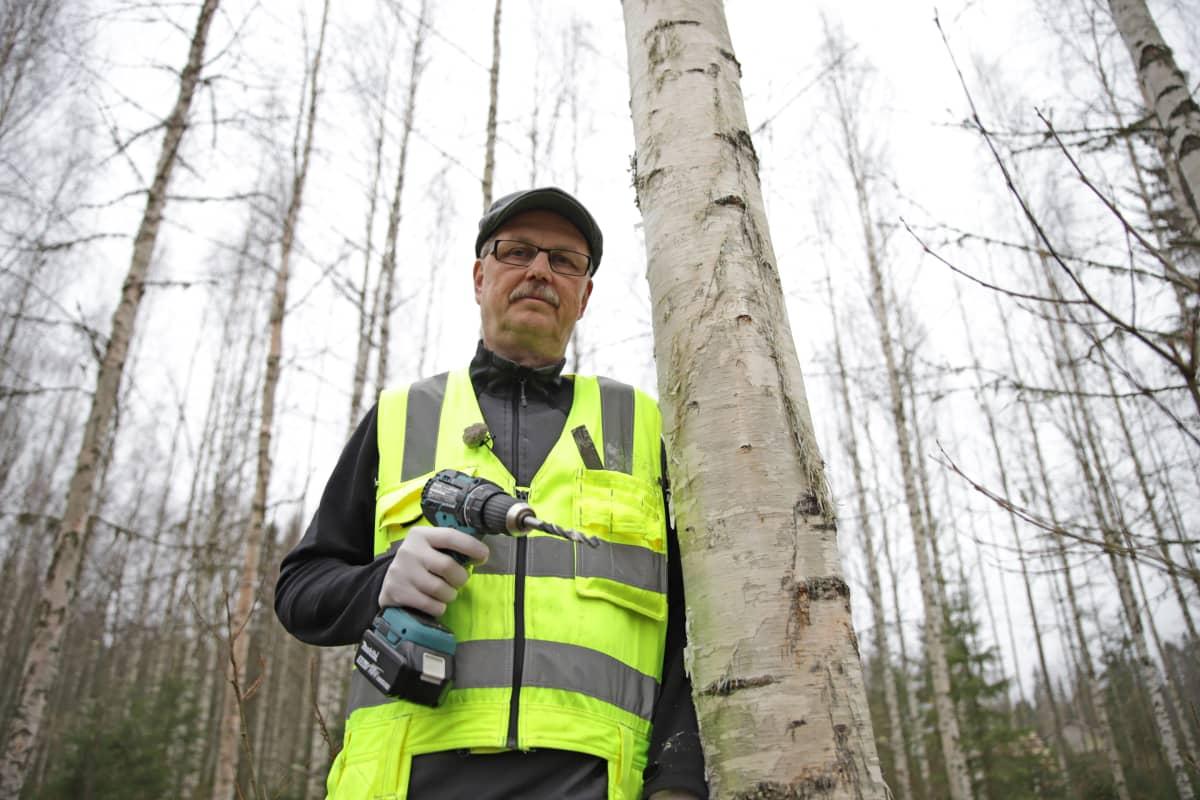 Pekka Kolari istuttaa koivikkoonsa pakuri-ymppejä.