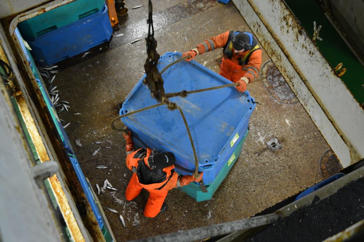 Ruokasilakat pakataan 400 kiloa vetäviin säiliöihin valmiiksi merellä.