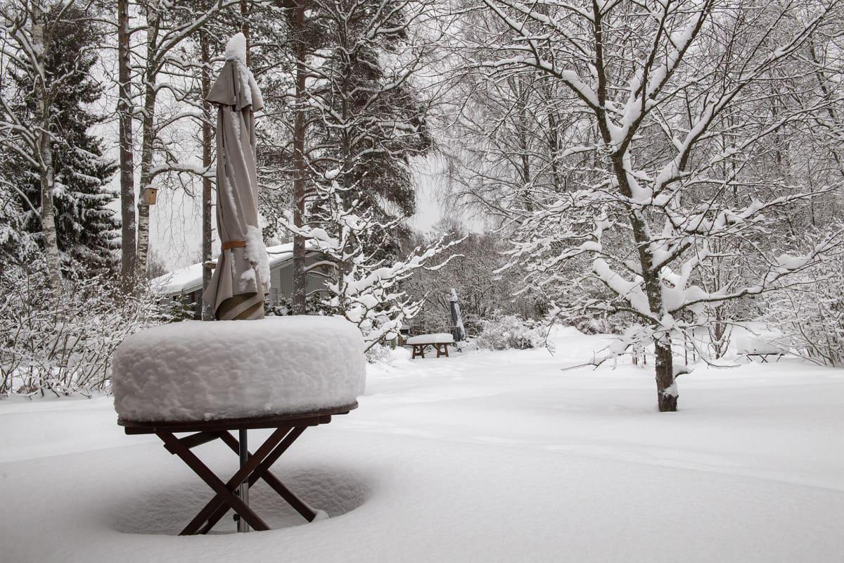 Talvinäkymä talvisesta pihapuutarhasta.