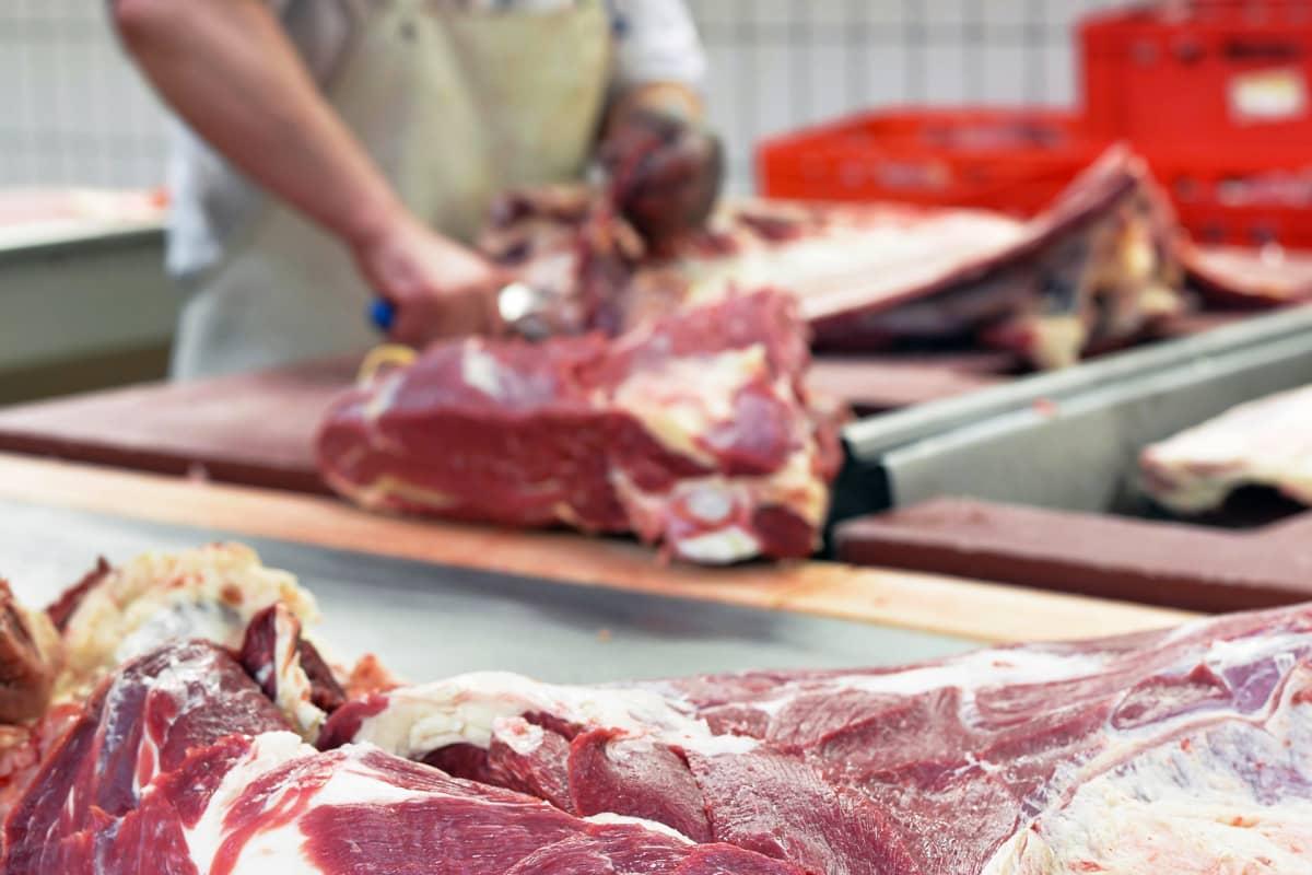 Teurastamolla leikataan juuri teurastettua lihaa.