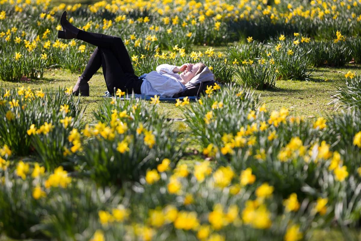 Keväinen narsissipuisto Lontoossa 25. helmikuuta.