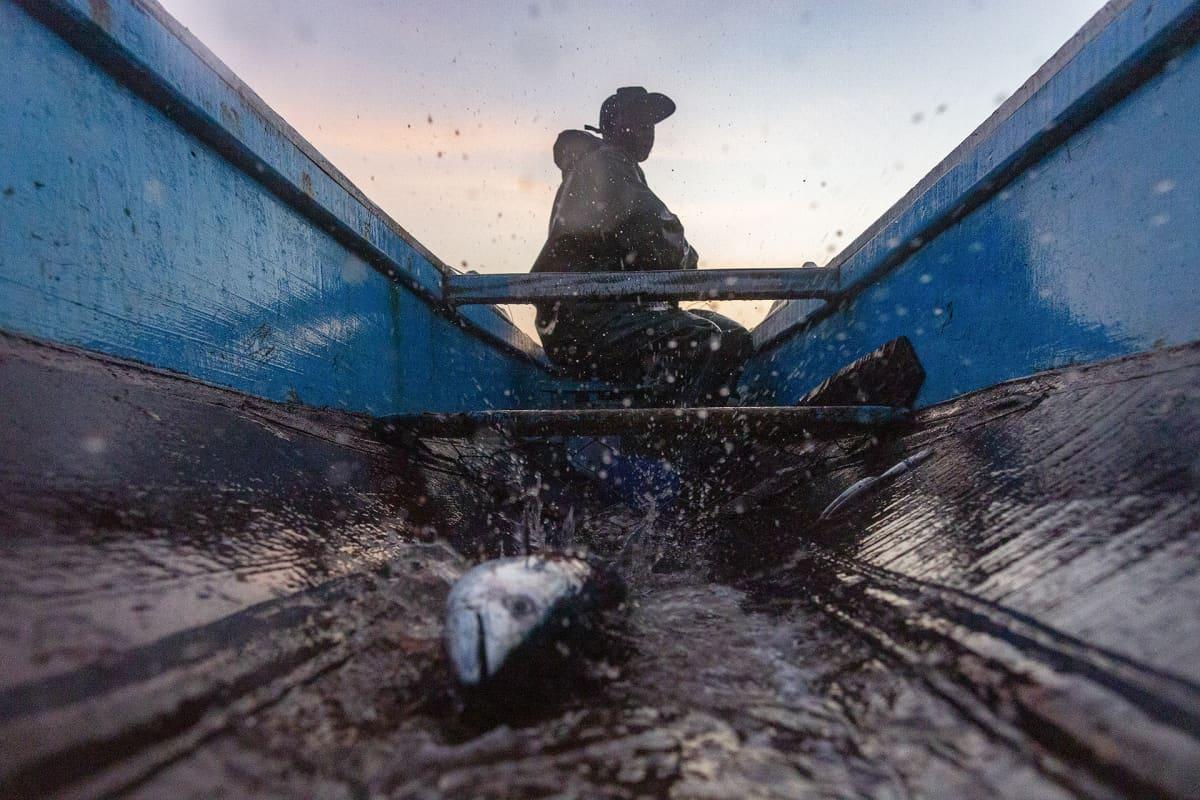 Mies veneellä kalassa, veneen phjalla räpistelee kala.