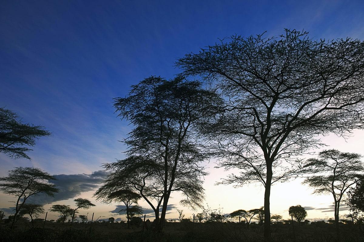 Akaasiametsä Etiopiassa.