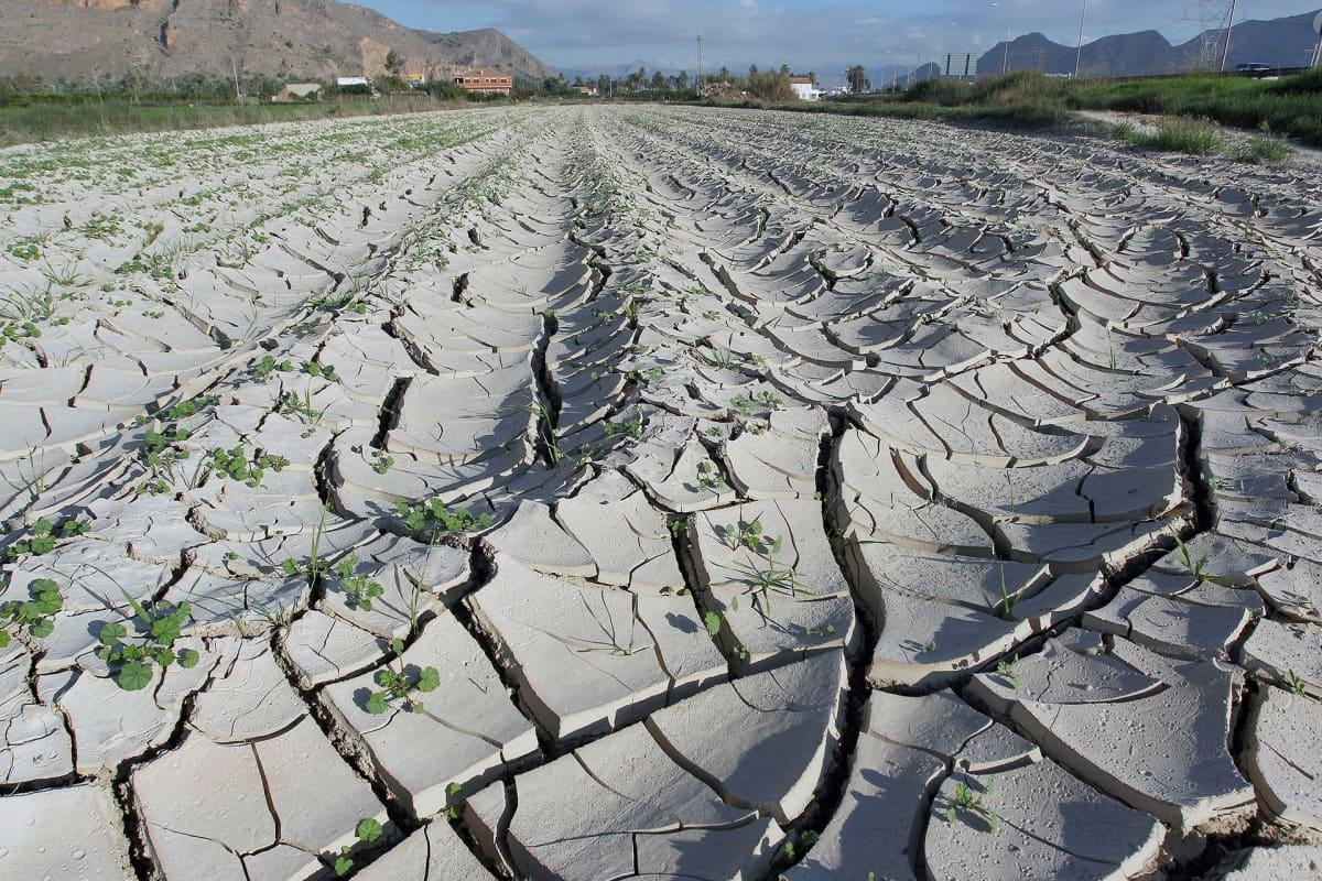 Espanjan itäosassa sijaitsevat pellot kärsivät kuivuudesta lokakuussa.