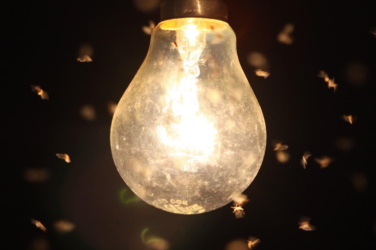 Hyönteisiä palavan lampun ympärillä yöaikaan.