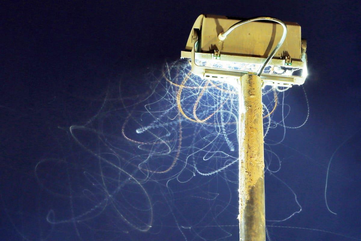Hyönteisiä parveilee lampun edessä Saksassa.