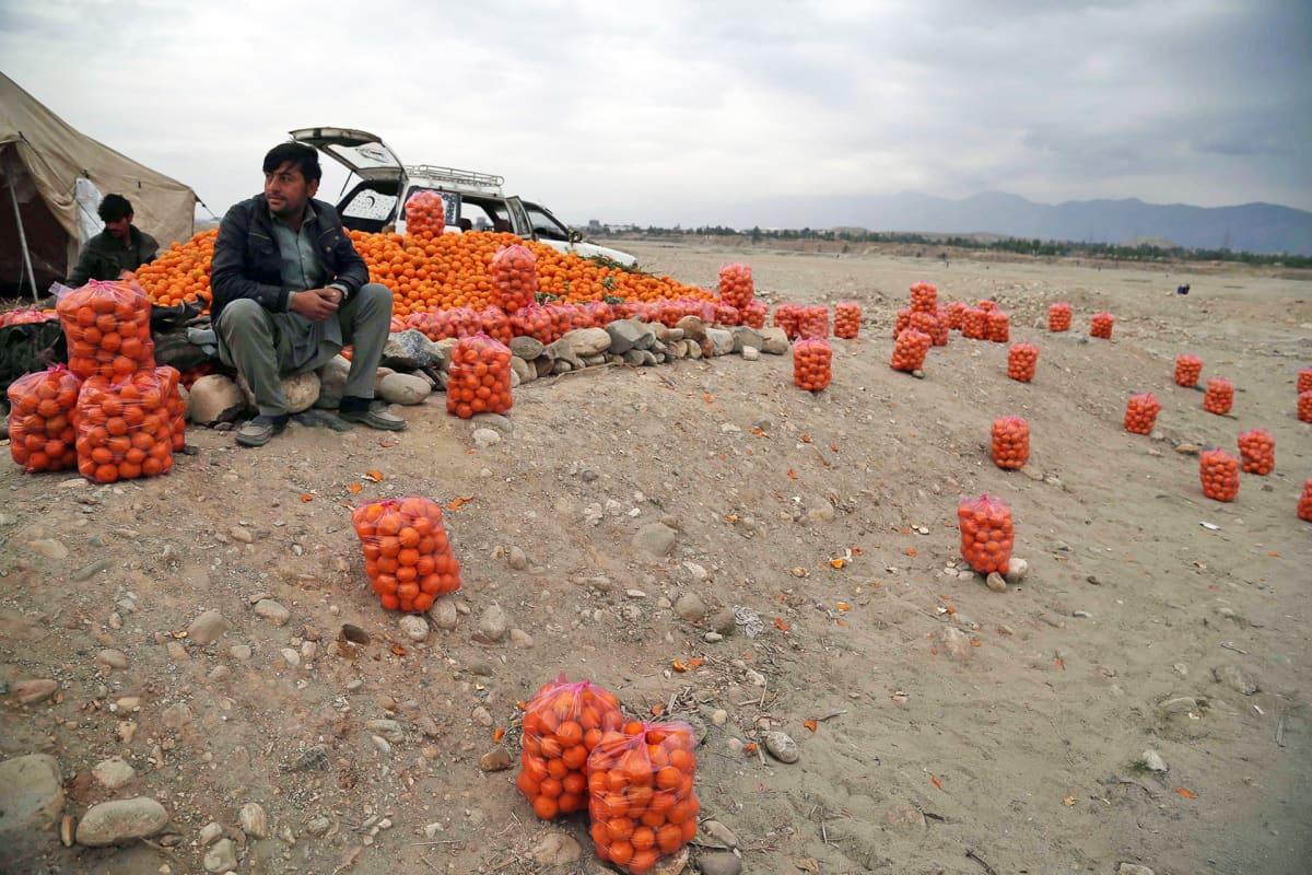 Appelsiinikauppias Jalalbadissa Afganistanissa.