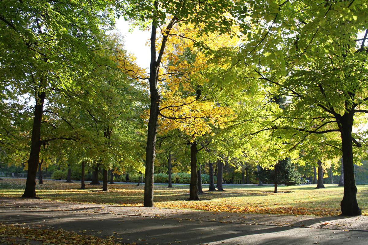 Lapinlahden puistoa.