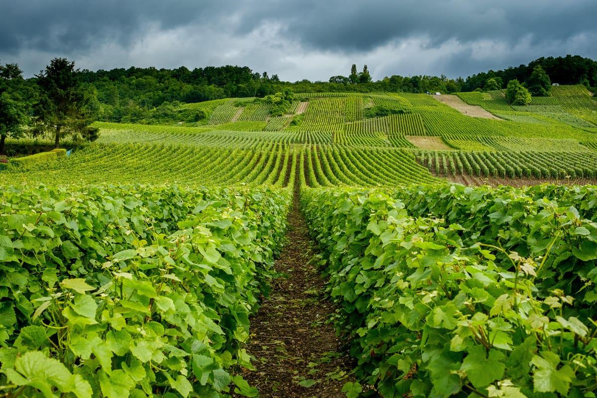 Viinitila Hautvillers Marnessa Ranskassa.