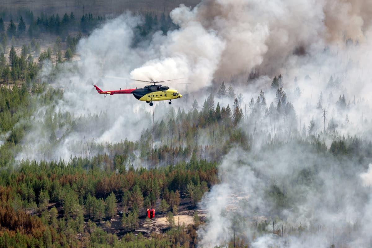 Maastopaloa sammutetaan helikopterista käsin Siperiassa.