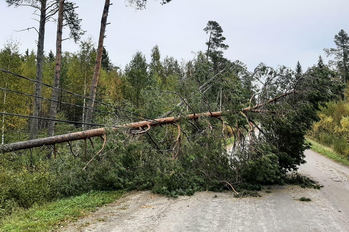 Kuvassa Aila myrskyn katkoma sähkölinja Kokkolassa.
