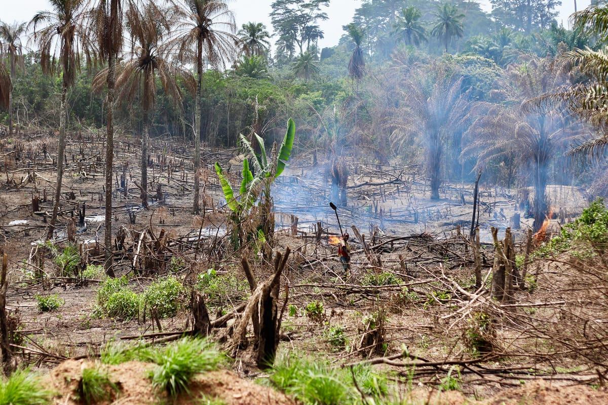 Suurin osa ihmisistä Liberiassa Sierra Leonen rajan kupeessa elää maanviljelystä, ja kaskiviljely on tavallista.