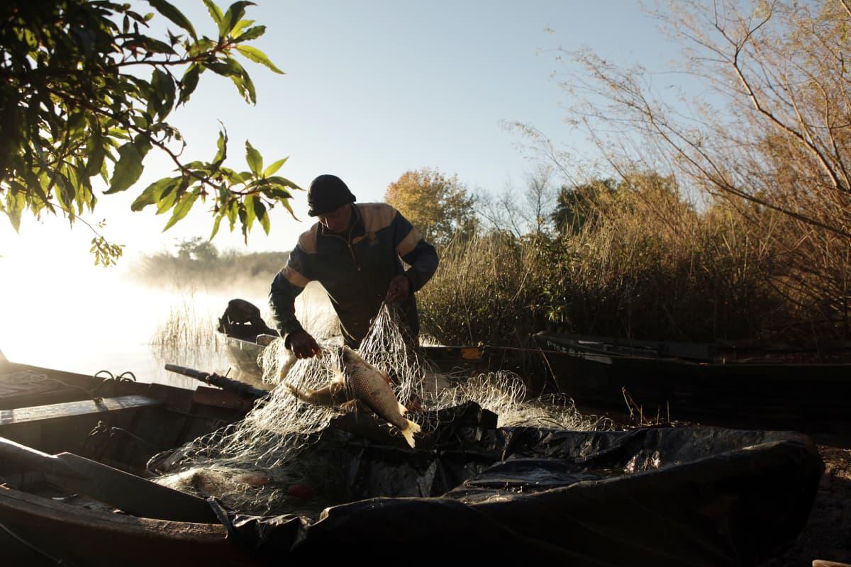 Kalastaja Vicente Rodríguez ottaa kaloja verkosta joen äärellä.