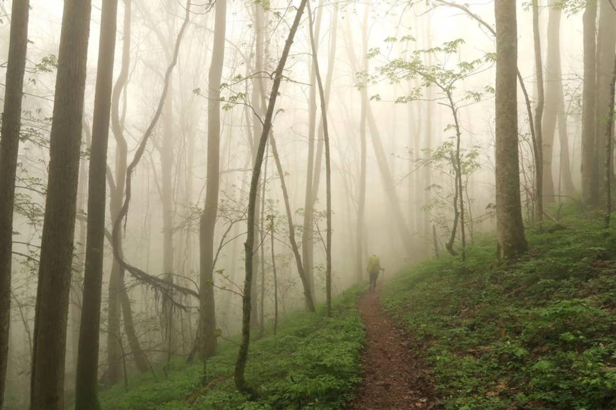 Vaeltaja sumuisessa metsässä.
