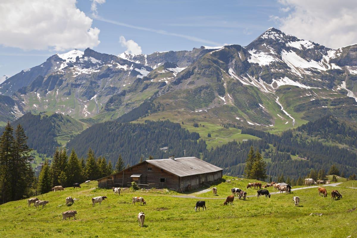 Sveitsin alpit.