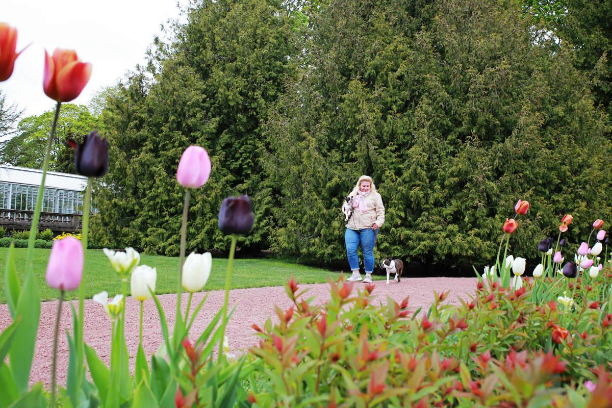 Tarja Hyvärinen ja hänen kaksi koiraansa puistossa.
