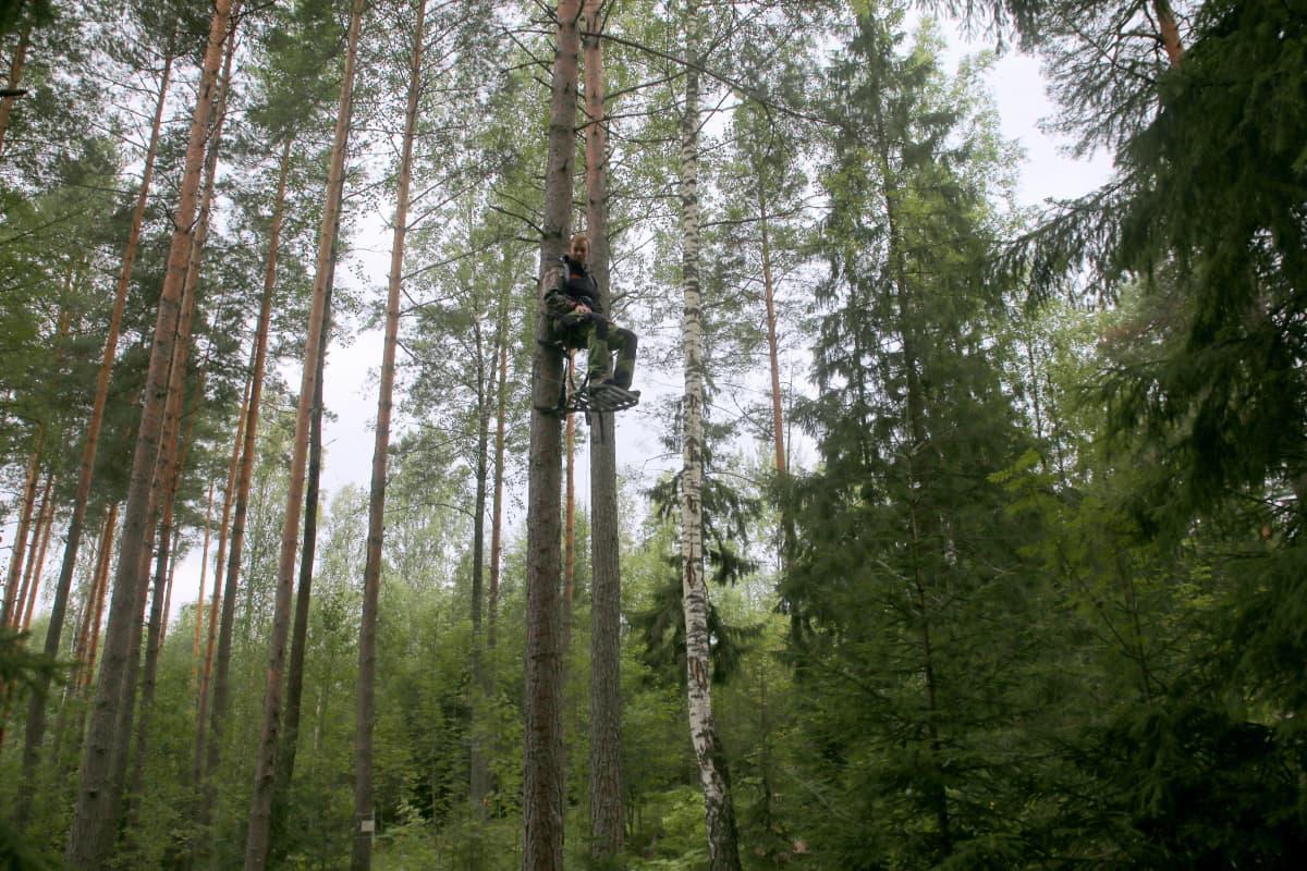 Suomen jousimetsästäjäinliiton puheenjohtaja Antti Saarenmaa puupassi  metsä jousiase taljajousi