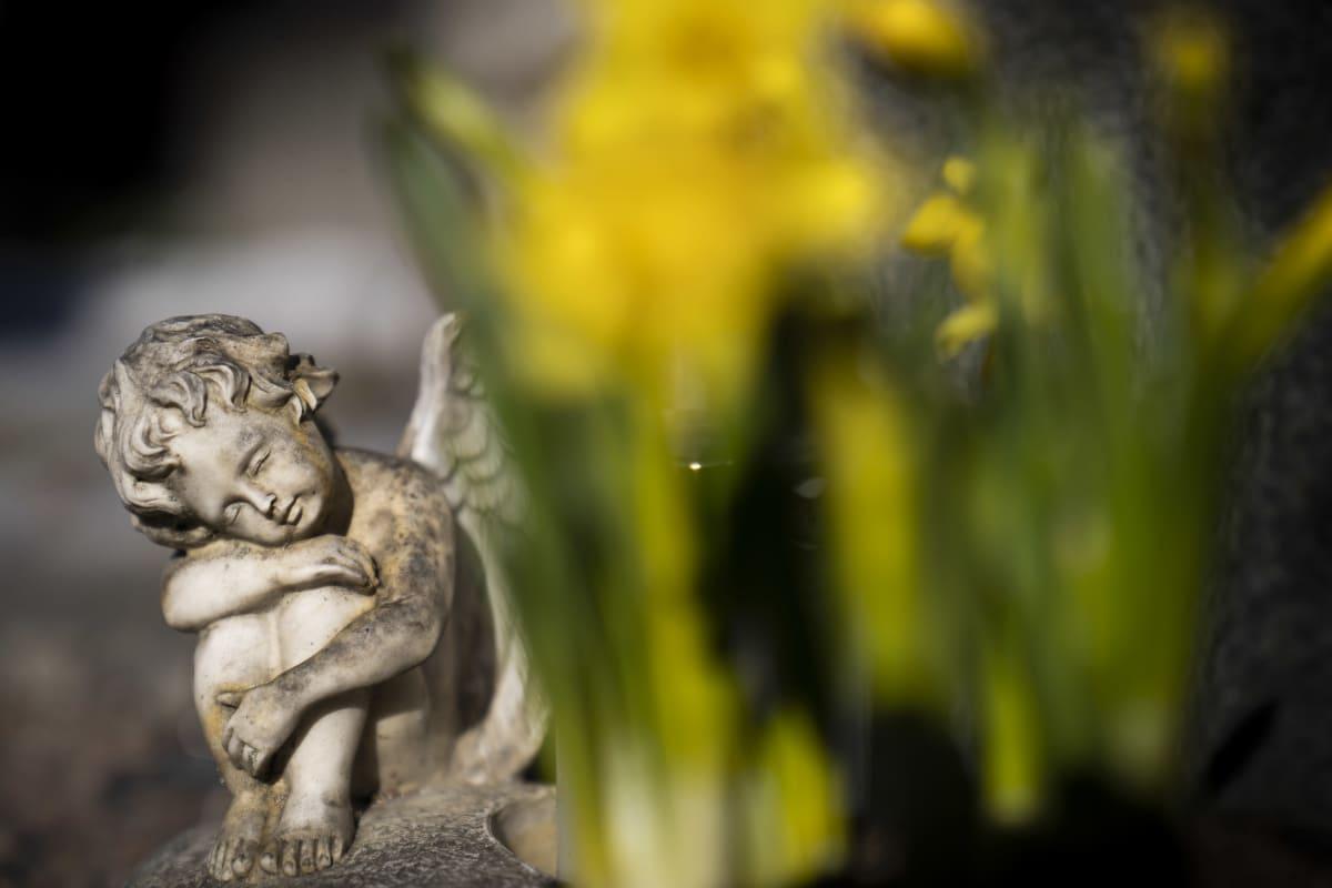 Enkeliveistos hautausmaalla narsissien keskellä.