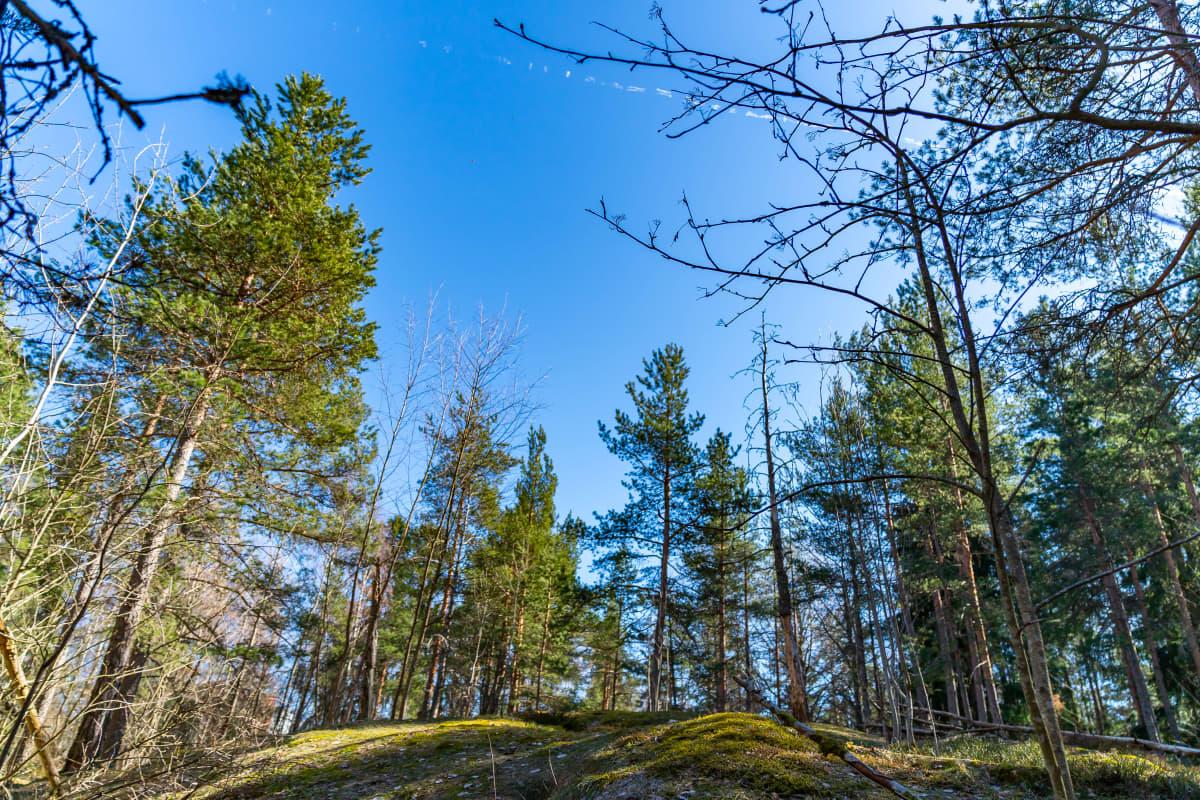 Suomen luonto.