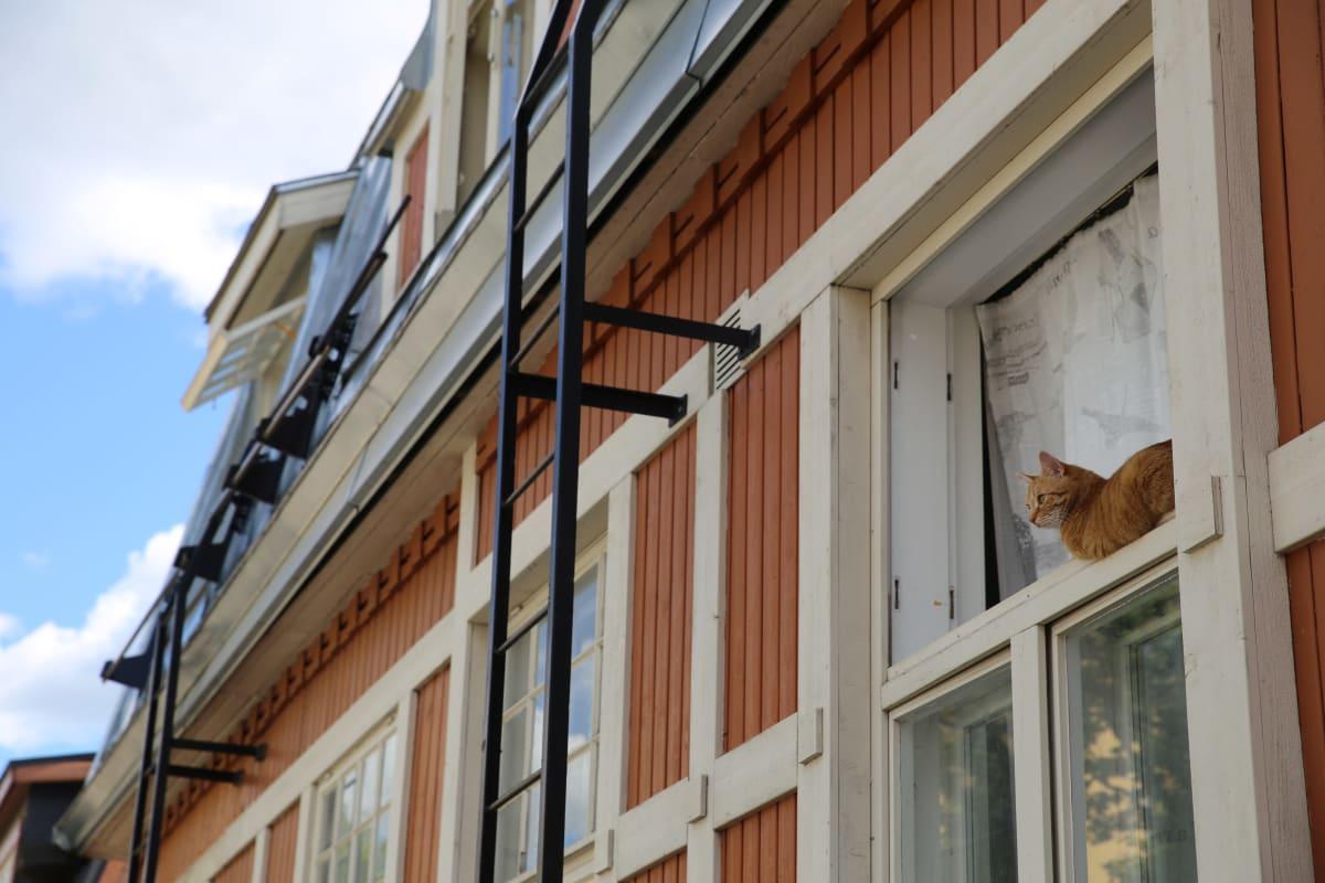 Kissa katsoo puisen jugendtalon ikkunasta puuvallilassa. Työväestön asunnot pyrittiin rakentamaan edullisesti, ja kaupunki edisti asiaa vuokraamalla tontteja halvalla.