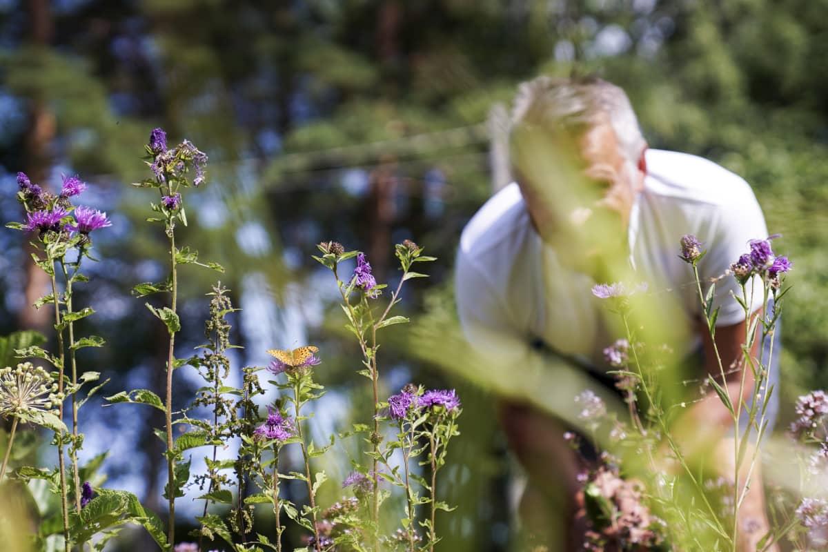 Tulevaisuuden tutkija Markku Wileniuksen mielestä on ensiarvoisen tärkeää ymmärtää, kuinka elollinen järjestelmän toimii. Tätä hän kutsuu planetaariseksi elämän taidoksi.