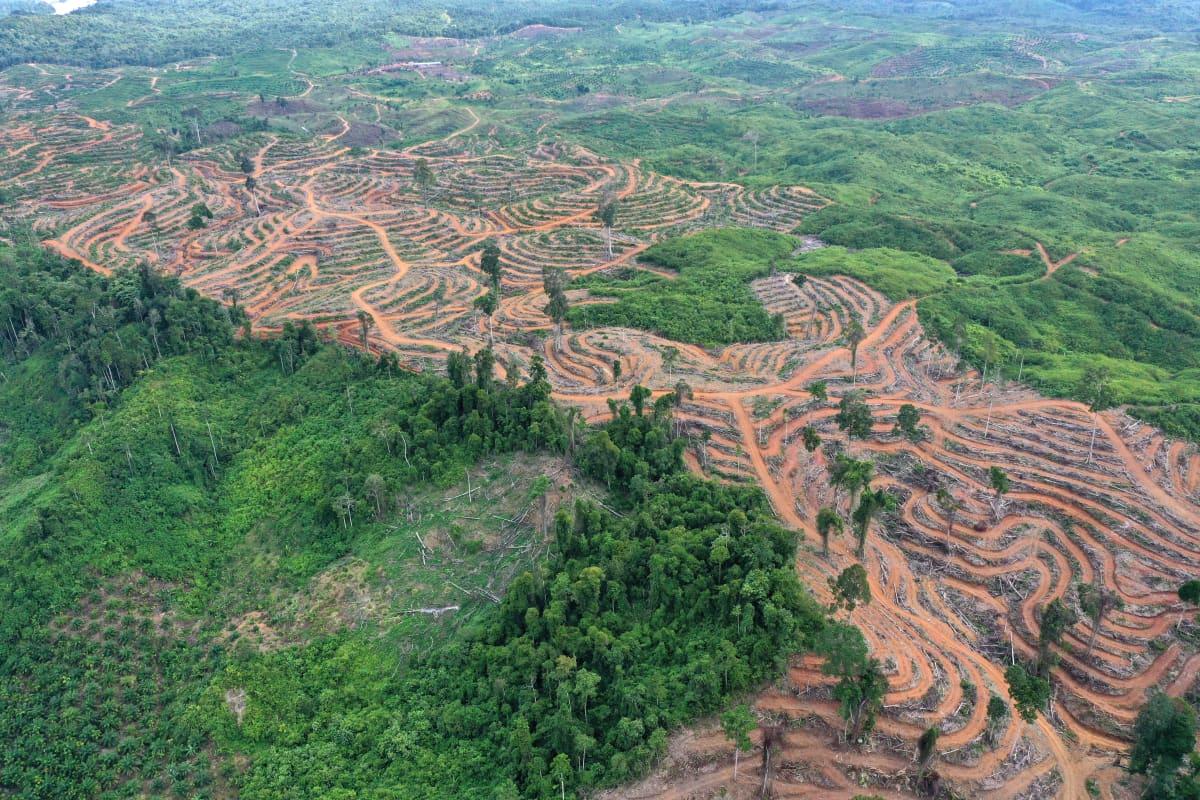 Hakattua sademetsää Indonesiassa ilmakuvana.