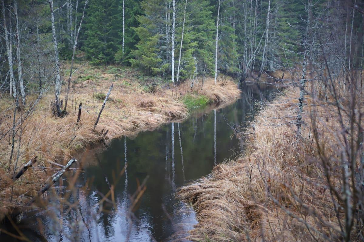 Hounionjoki Virojoen latvassa.