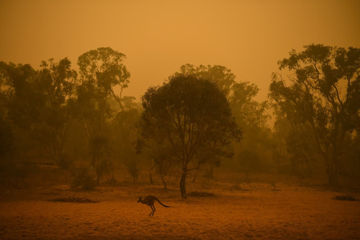 Kuva Canberran alueelta 5. tammikuuta. Canberran ilmanlaatu oli sunnuntaina maailman huonoin.
