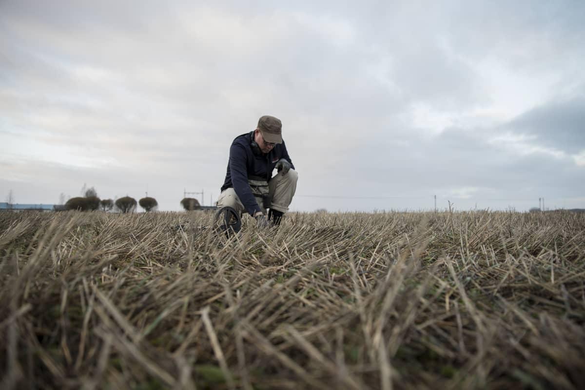 Metallinetsinharrasta Jaakko Aarniveräjä kaivamassa kuoppaa pellolla.