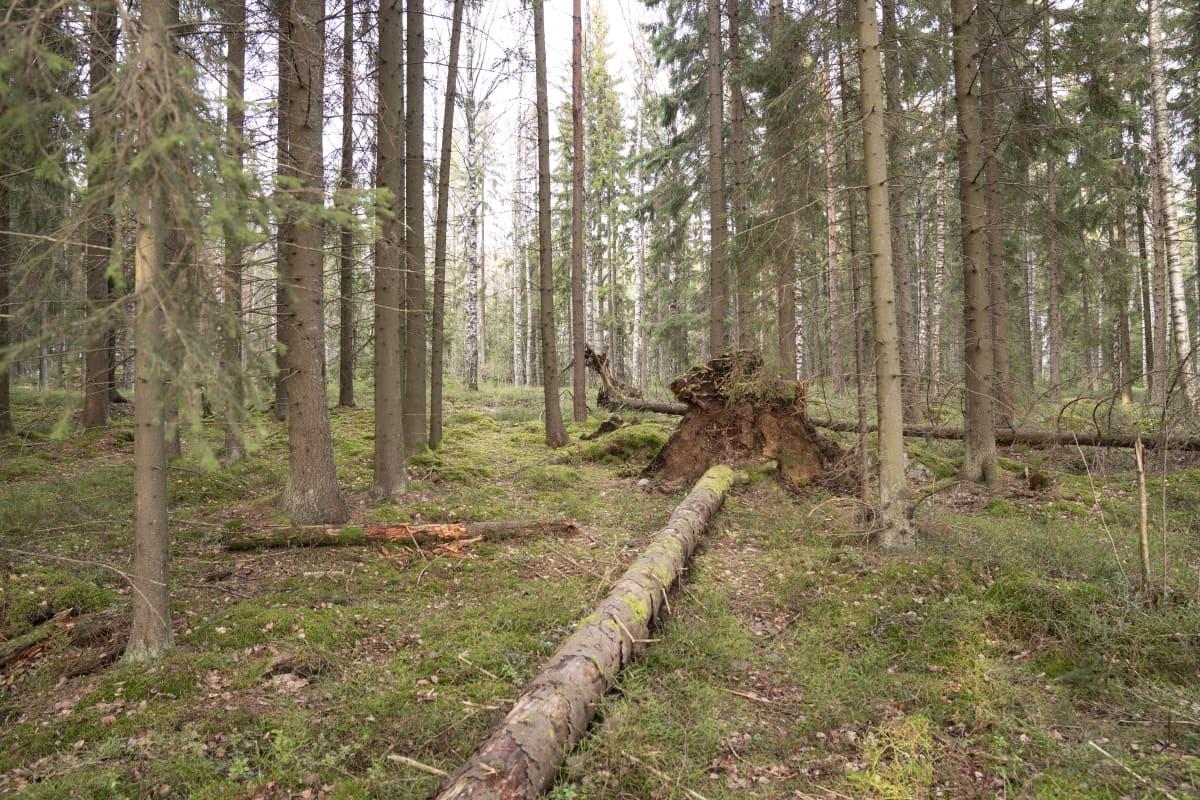 Vuosaari / luontokuva / metsä maisema / särkkäniemi 22.01.2020