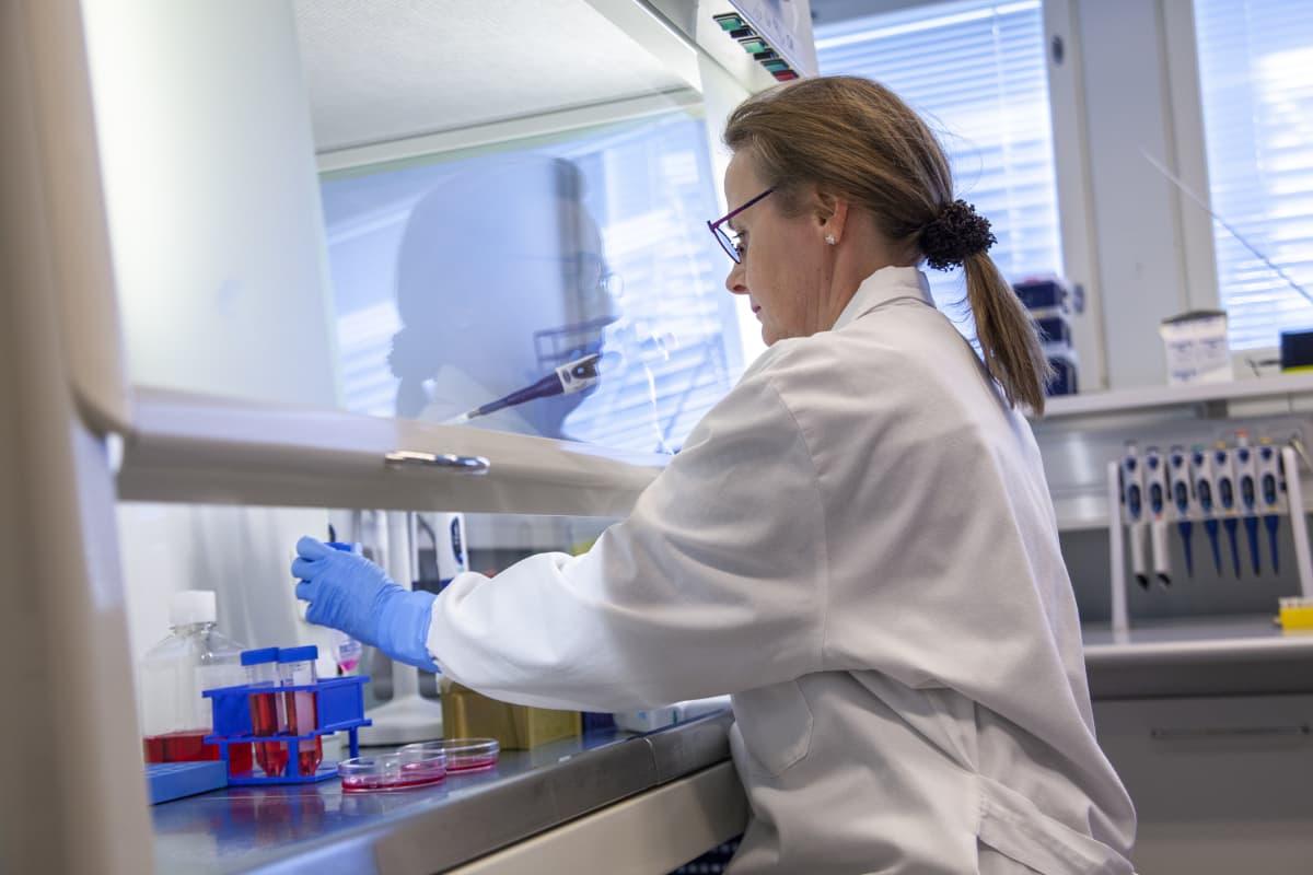 Laboratoriomestari Eila Korhonen Itä-Suomen yliopistossa, tutkii soluviljelmää