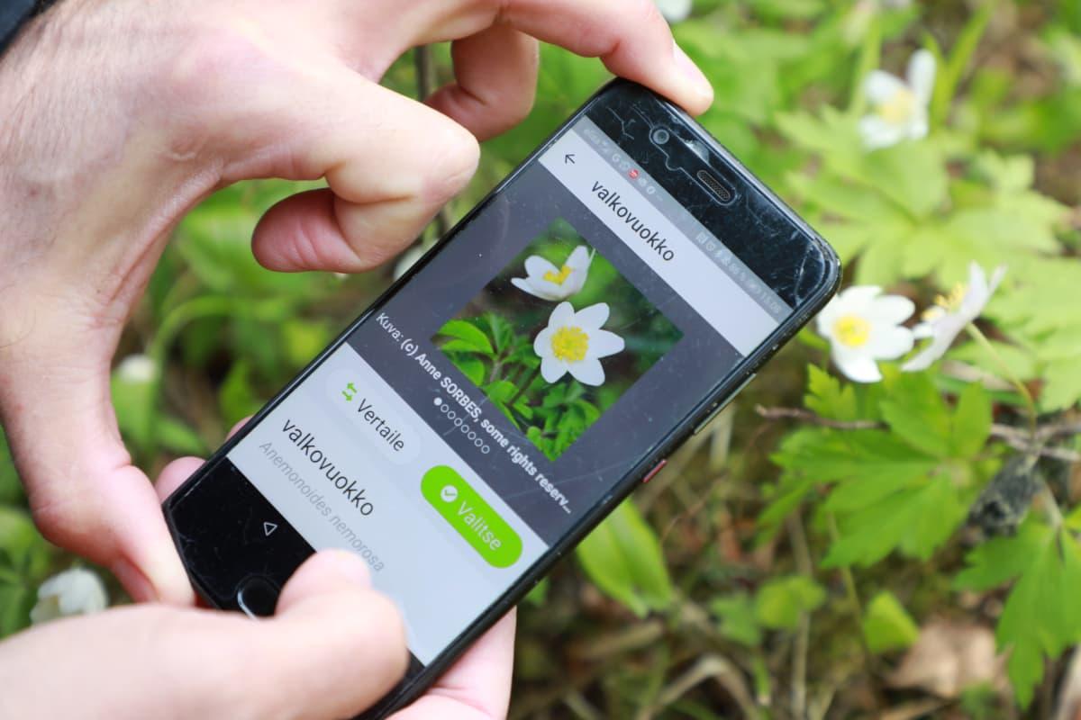 iNaturalist mobiilisovellus