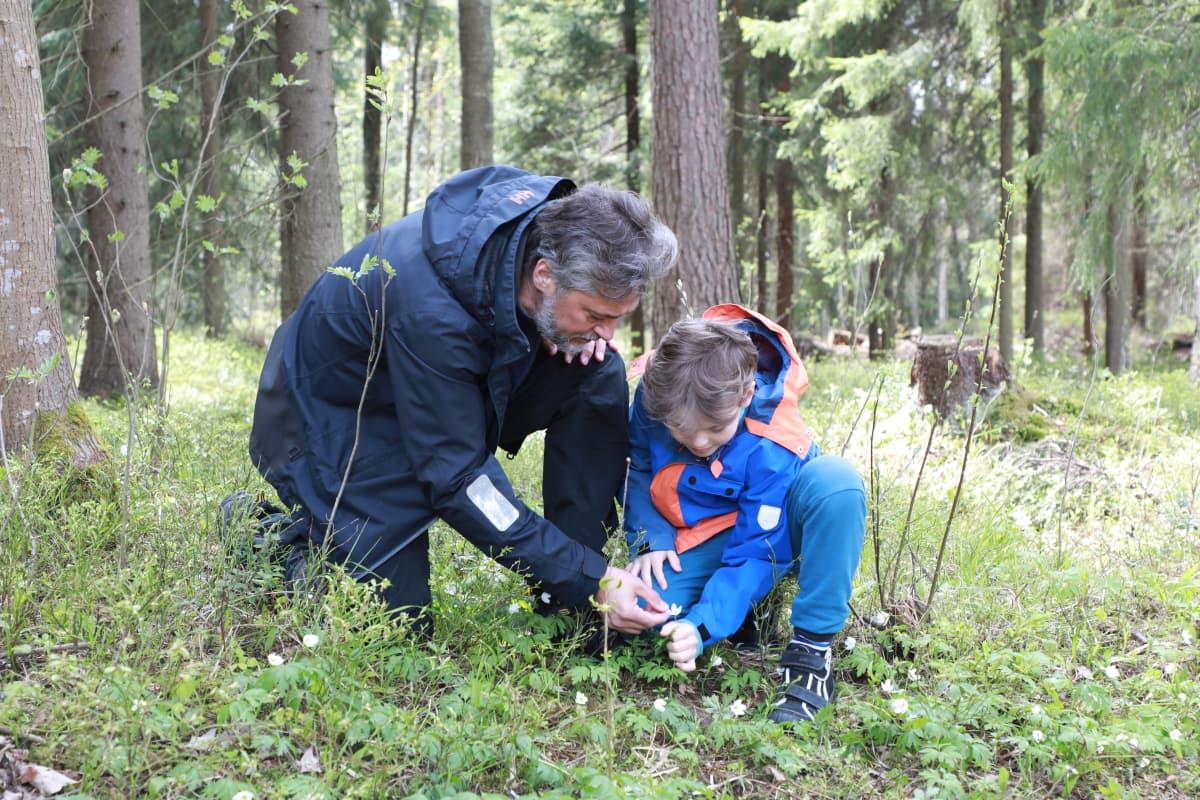 valkovuokkoja tutkitaan metsässä