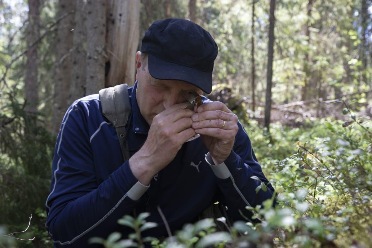 Metsähallituksen luontopalveluiden luontokartoittaja Timo Kypärä tutkii luppilla sammalia.