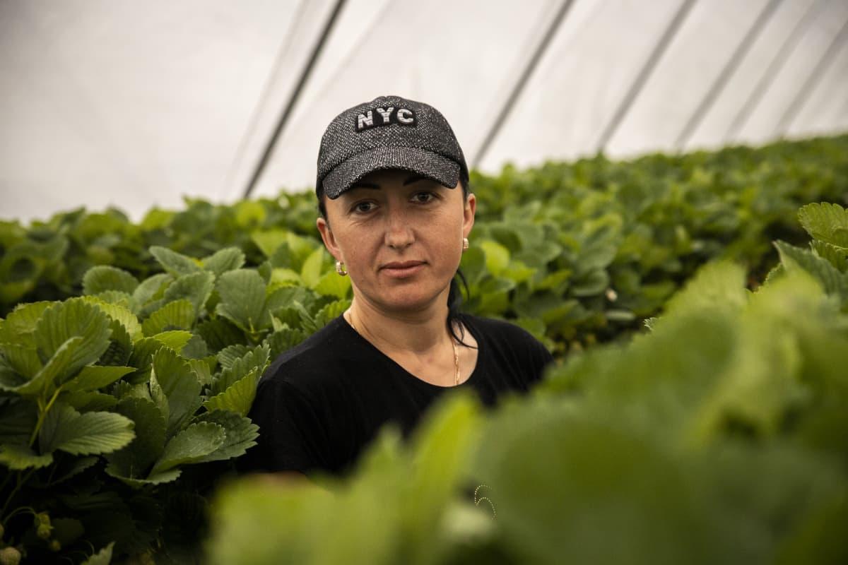 Natalia Dotsenko, Ukrainasta keräämässä mansikoita