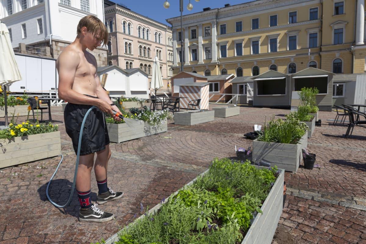 Eero Lähdeaho kastelee kasveja Senaatintorilla.