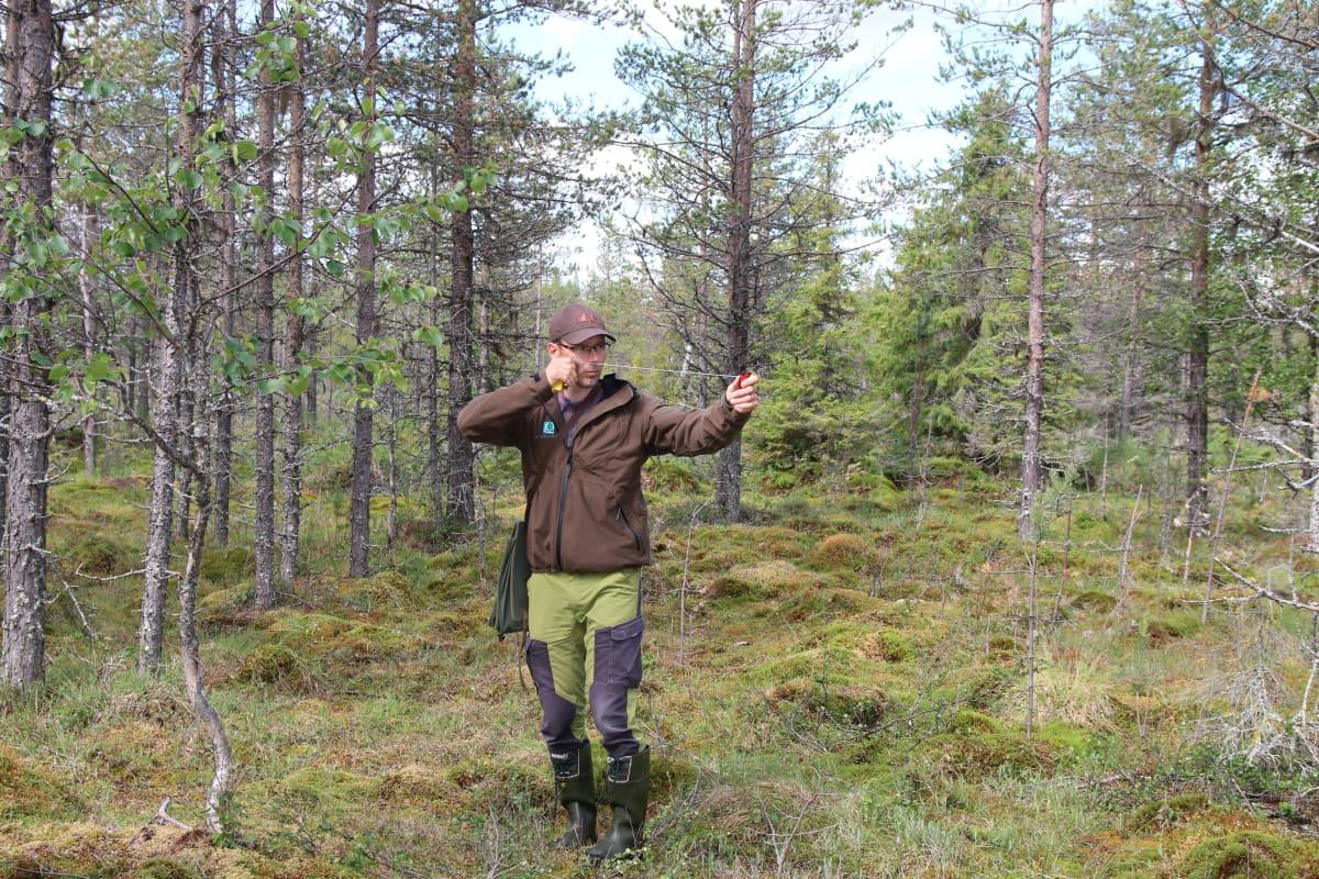 Metsähallituksen suunnittelija Marko Kunnari mittaa relaskoopilla puun määrä ojitetulla suolla Kolarin Aalistunturilla