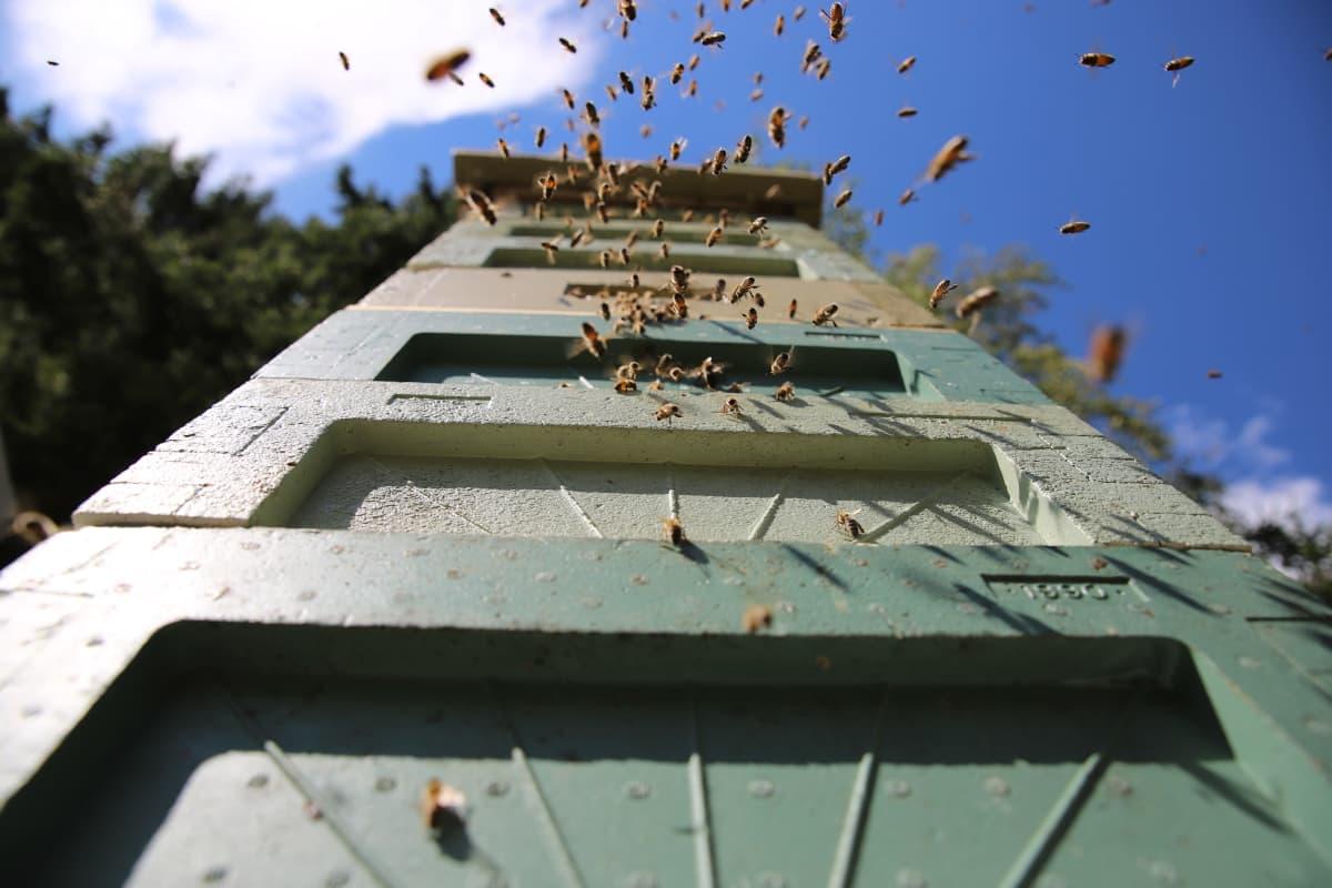 mehiläispesä ulkoa