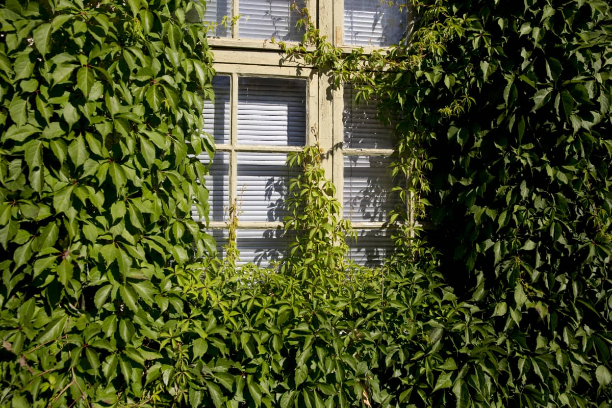 Juhalatalona tunnetun rakennuksen ikkuna Nikkilän vanhan sairaalan alueella.