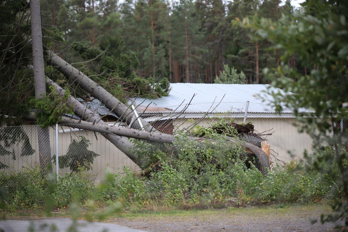 Kaatunut puu Reposaaren urheilukentän huoltorakennuksen päällä.