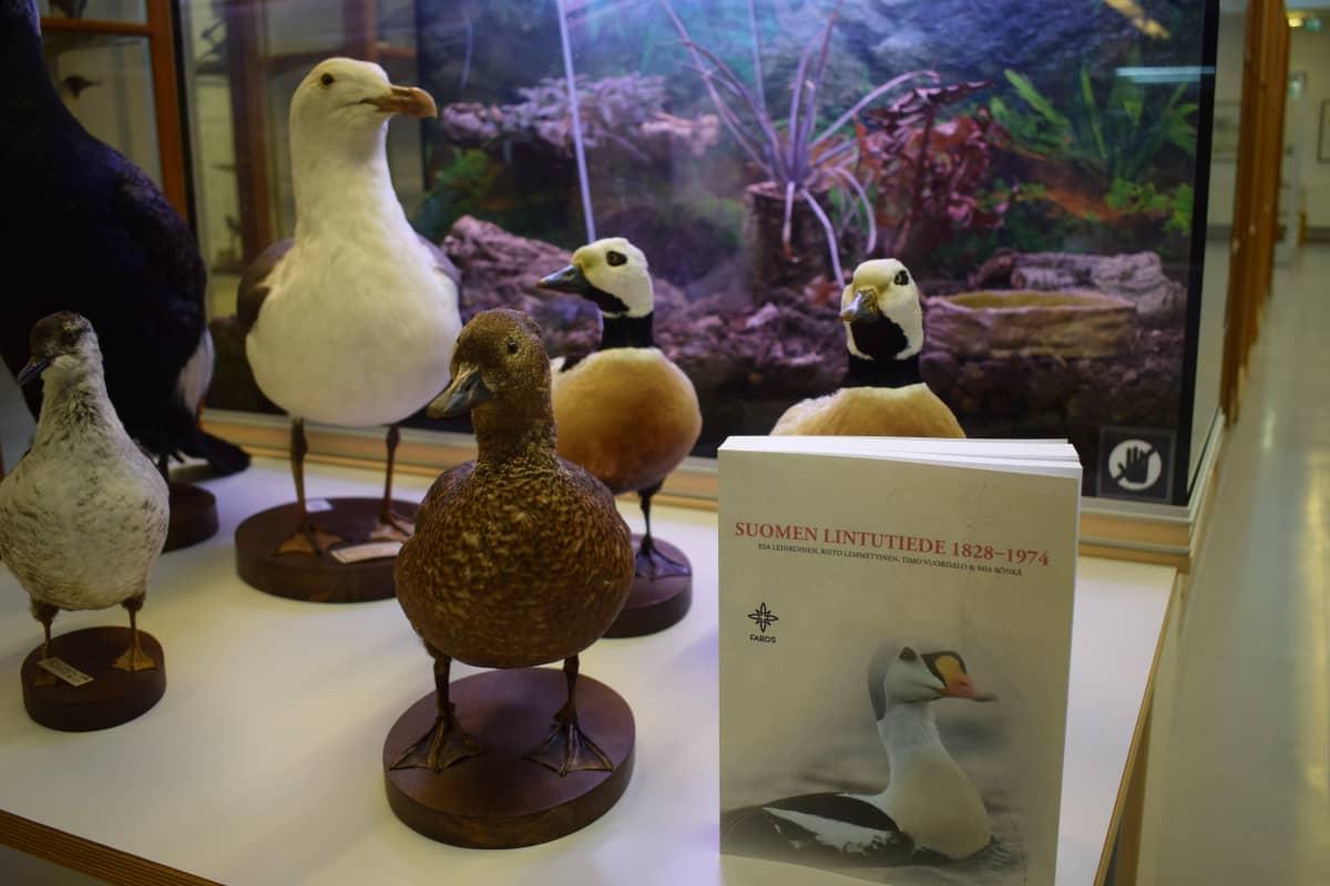 Turun yliopiston eläinmuseon lintuja pöydällä ja lintutiede kirja