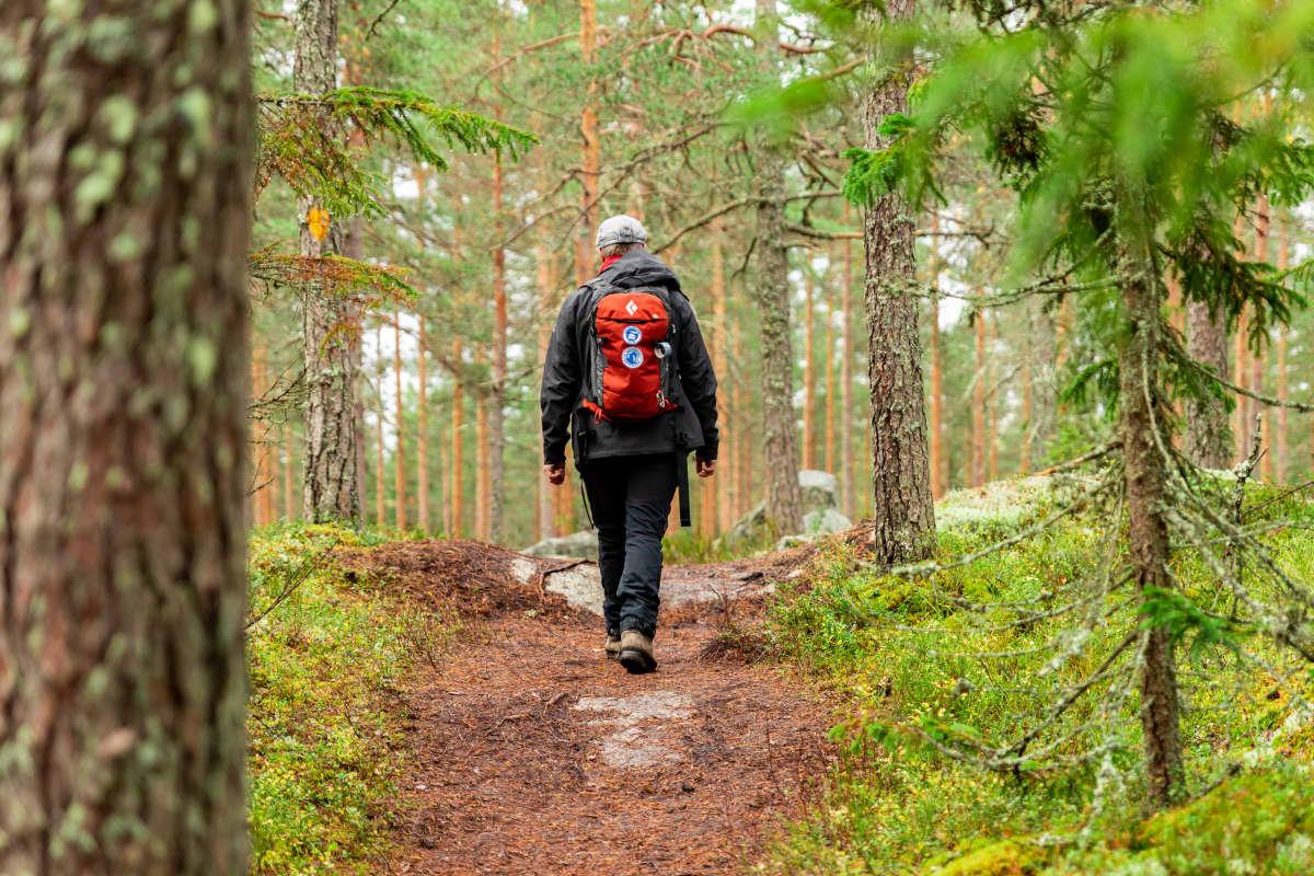 Ekokumppaneiden retkeilyasiantuntija Petri Mäkelä metsässä
