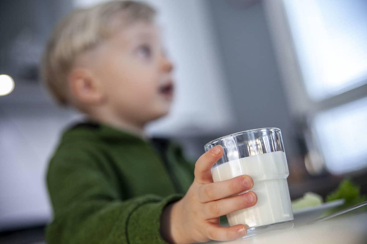Pieni poika juo maitoa ruokapäydön ääressä.