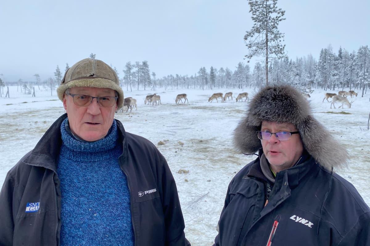 Oraniemen paliskunnan poronhoitajat Kalle Kuntonen ja Olli Pulju. Sodankylä tammikuu 2021.