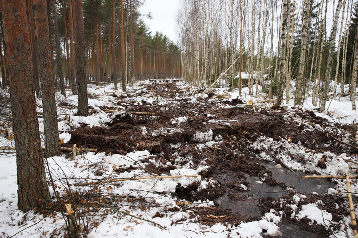 Kaivinkoneella täytetty oja Munasuolla Valkmusan kansallispuistossa.