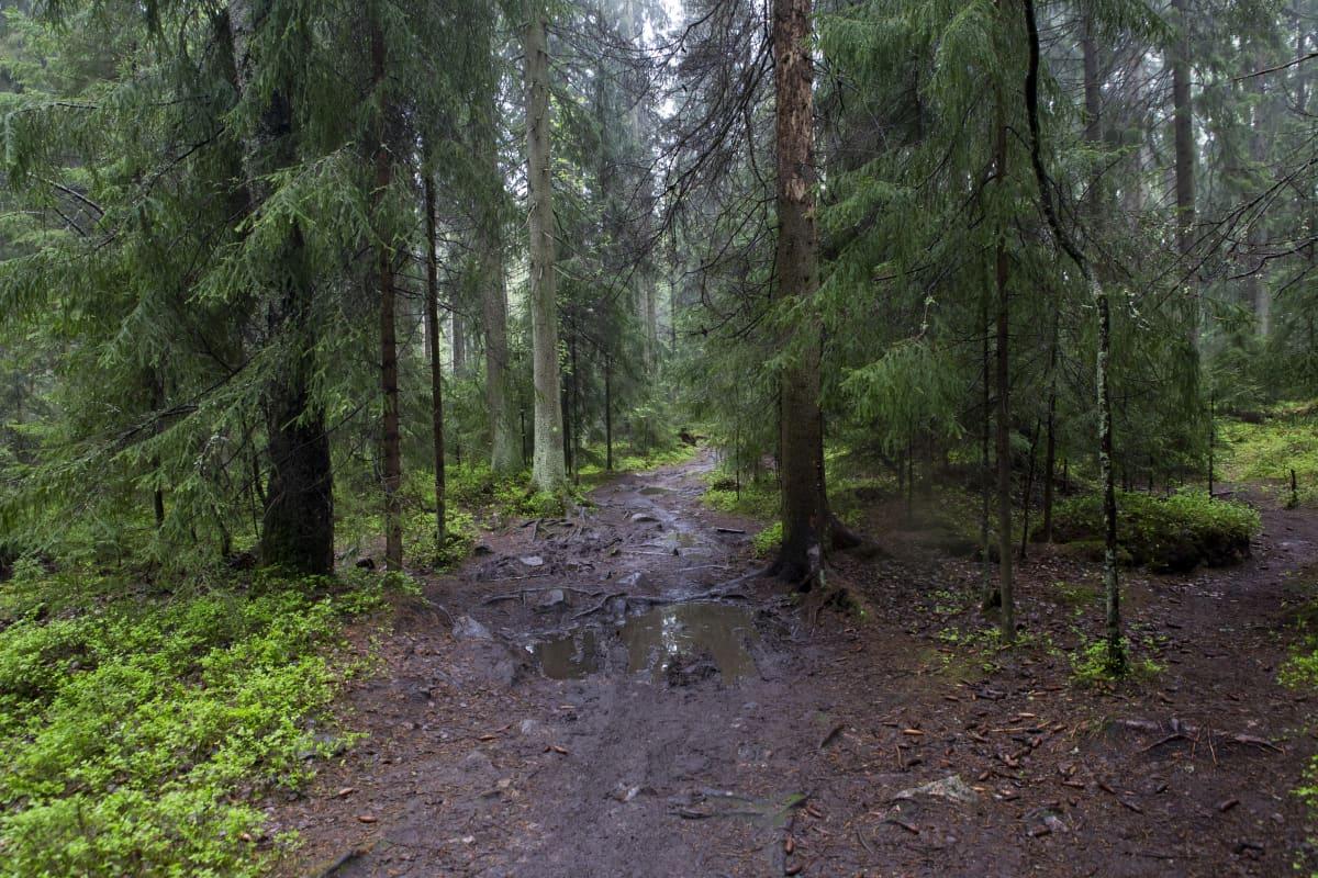 Polku Helsingin keskuspuistossa