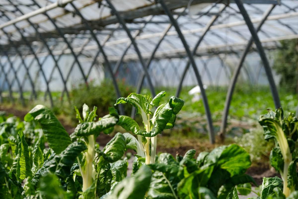 Orgaanista viljelyä Tolousessa.