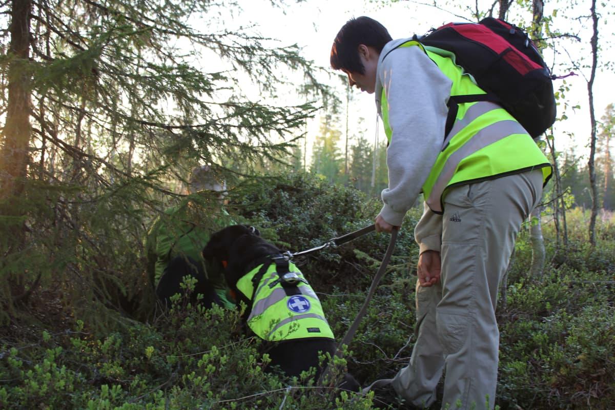 Vapepan etsintäharjoitus metsässä. Kadonnutta esittänyt löytyi Taivalkosken etsintäharjoituksessa Marika Tiermaksen ja Moona-koiran yhteistyöllä.