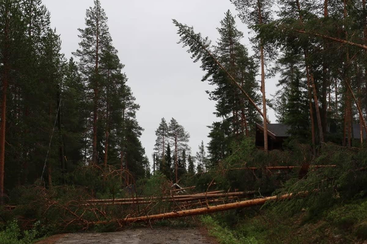 Paula-myrskyn tuhoja Taivalkoskella metsässä
